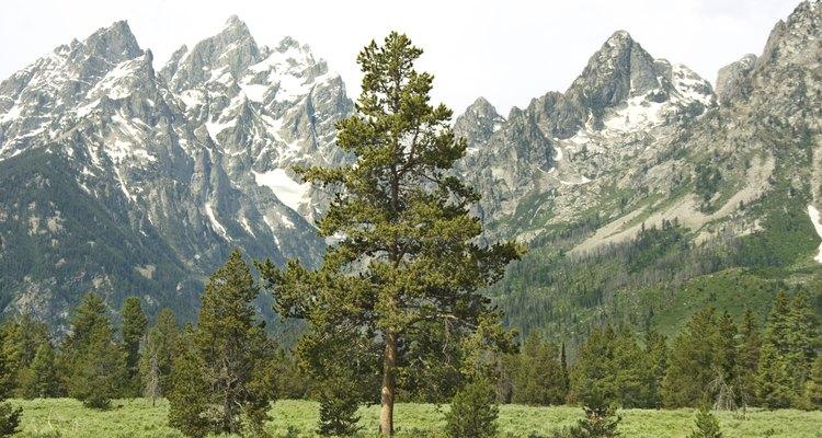 Los picos de 13.000 pies de Grand Teton dan valles ricos en vida silvestre.