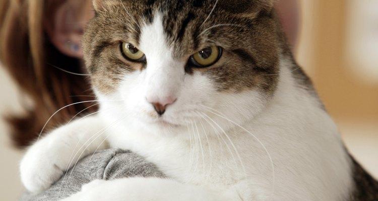 Gatos são conhecidos por serem animais limpos e autoconfiantes