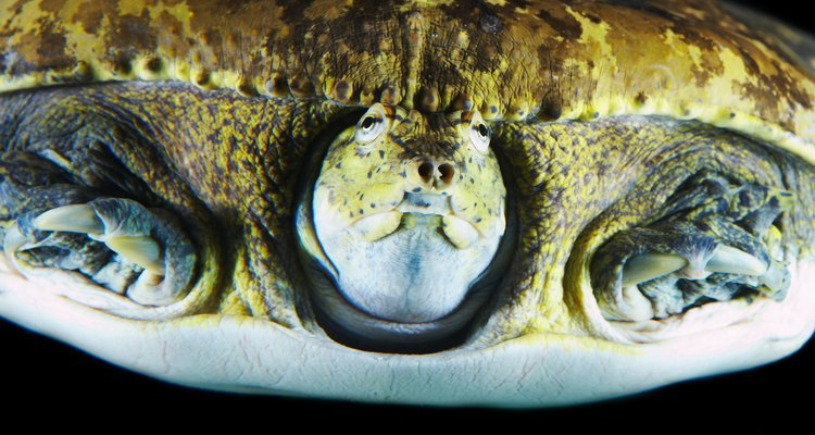 O Golfo do México é onde vivem cinco das sete espécies de tartarugas marinhas