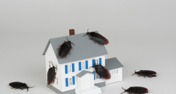 Loa aparatos de conexión eléctrica afirman repeler plagas de tu casa utilizando sonidos y vibraciones.