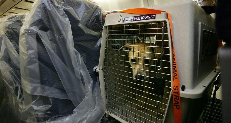 Antes de comprar una transportadora, mide y pesa a tu perro para elegir la correcta.