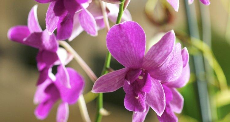 Coloca unas pocas flores de las orquídeas hacia abajo en el plato.