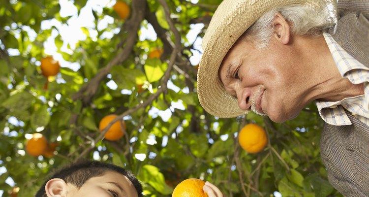 Como podar uma laranjeira