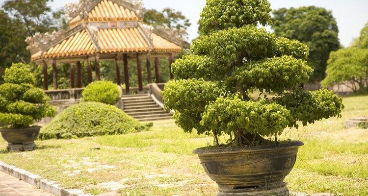 Los arbustos y árboles enanos mejoran sin dominar un paisaje.