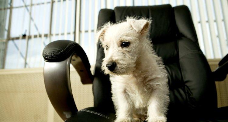 Si el cachorro se deja suelto sin supervisión, los accidentes pueden ocurrir.