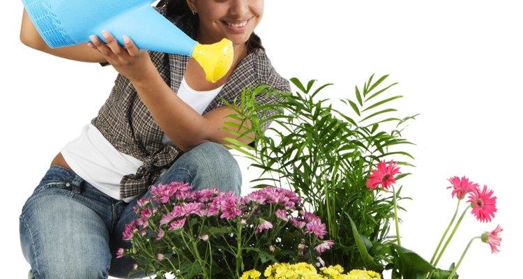 Riega tus plantas según sus necesidades específicas.