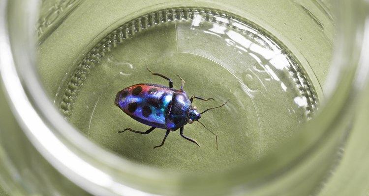 Ninguém quer nadar perto de insetos que podem morder