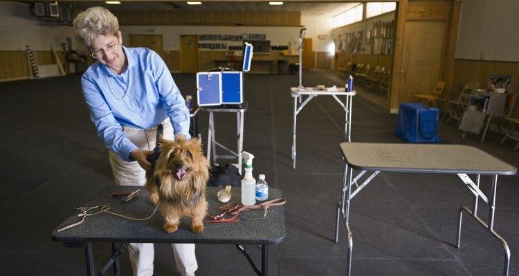 Pregunta al peluquero canino si sabe arreglar perros de pelaje denso.
