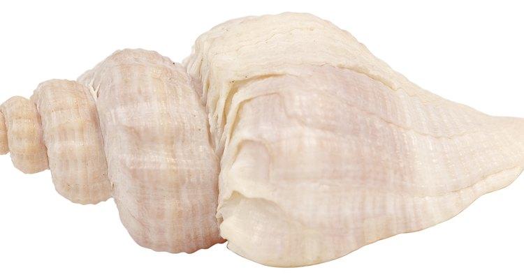 Imergir as conchas em vinagre pode criar um efeito de dissolução