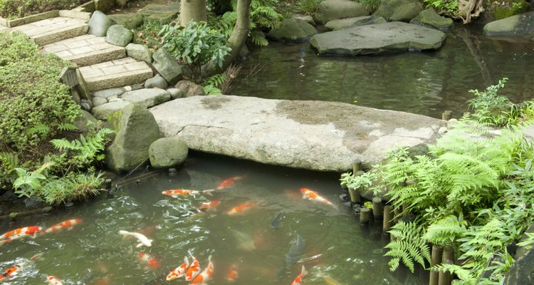 Good types of bacteria act as natural pond-cleaning agents.