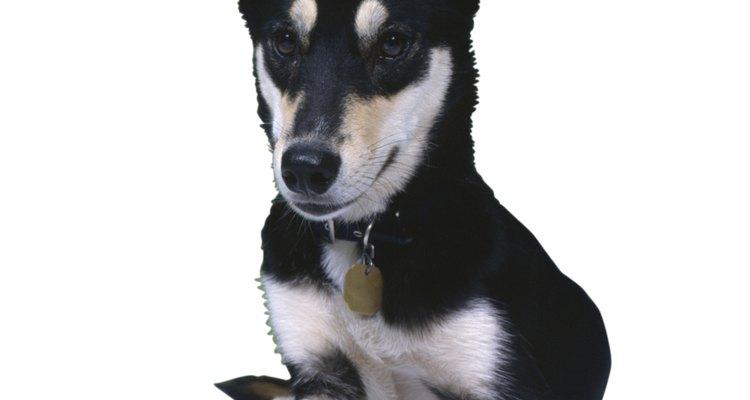 Evite que seu cão fique com manchas de saliva