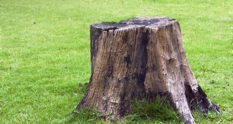 Turn your back garden tree stump into a useful and appealing bird bath.