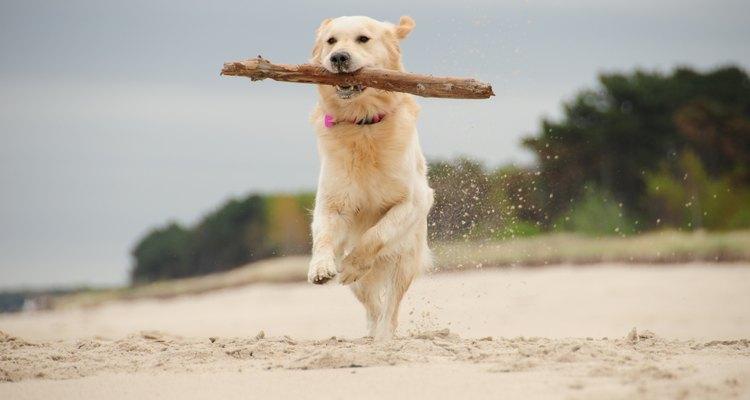 La clindamicina no daña el DNA de los perros.