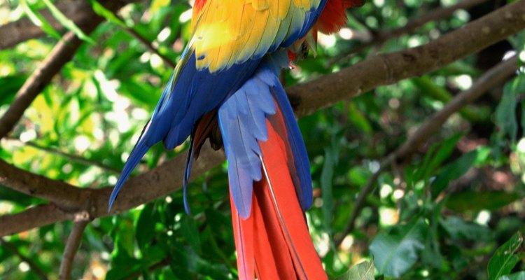 Aves de estimação geralmente escondem sintomas de doenças ou machucados