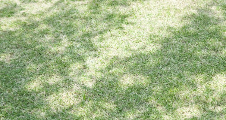 Acabe com o capim antes que ele tome conta do gramado