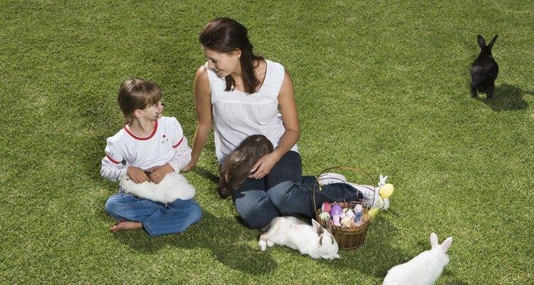 Los conejos son muy inteligentes y pueden ser entrenados.