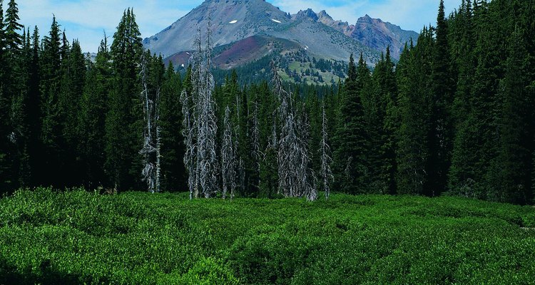 La cima de Brojen Top está sobre Deschutes National Forest.