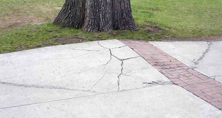 É mais barato remover uma árvore problemática, agora, do que esperar ela se tornar um problema maior