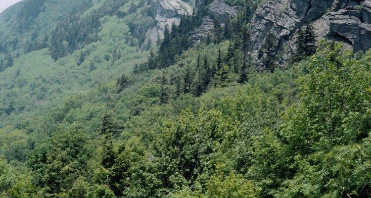 El pico de la montaña Grandfather ofrece espectaculares vistas de las montañas y bosques circundantes.