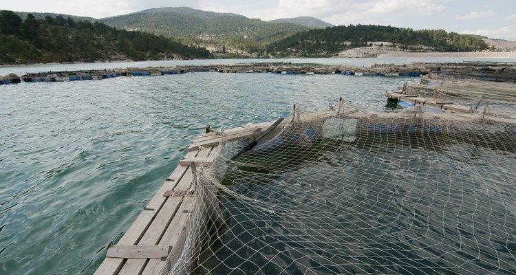 Um tanque de piscicultura