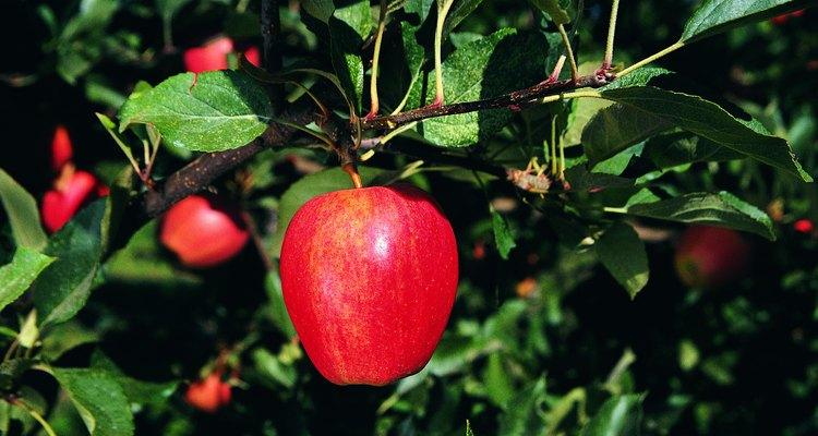 Sólo un número significativo de insectos pueden producir graves daños en las hojas y los árboles.