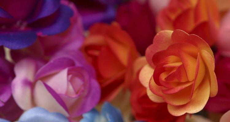 Las rosas naranjas han significado amistad.