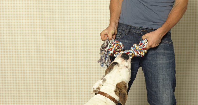 Playing helps boxers maintain a healthy weight.