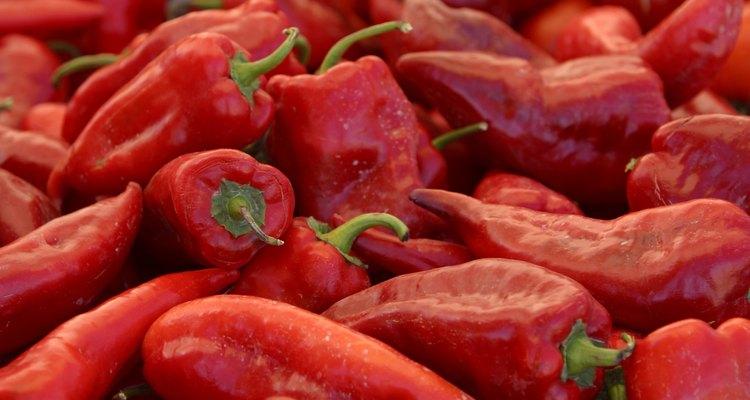 Capsicum annuum es la especie más conocida, extendida y cultivada del género Capsicum de la familia Solanaceae.