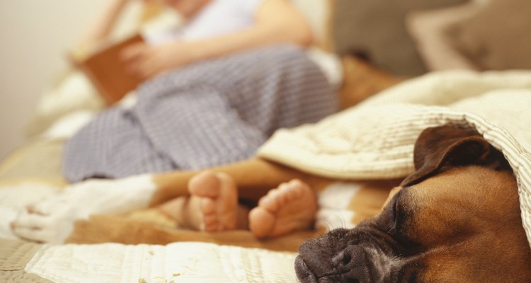 Si tu mascota es letárgica, está falta de apetito o tiene un impedimento para el crecimiento, considera pedirle a tu veterinario que examine sus niveles de B12.