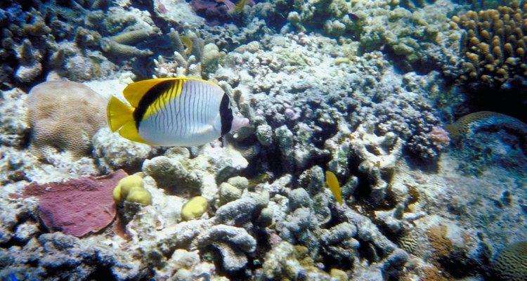 Los arrecifes de coral son ecosistemas biológicamente diversos amenazados por la pesca indiscriminada, la contaminación y el calentamiento global.