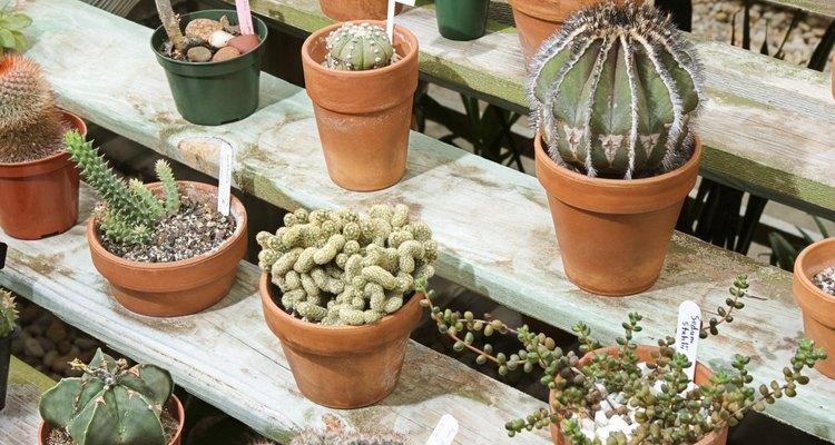 Los cactus pueden tener diferentes formas y tamaños.