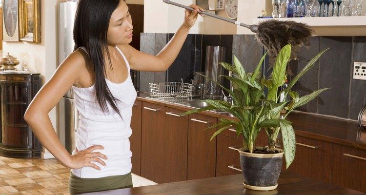 Algunos propietarios utilizan un plumero para limpiar.