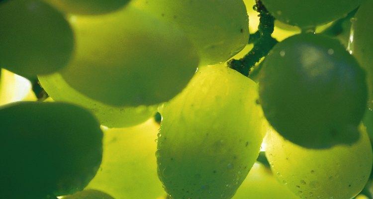 Las uvas varían en color desde blanco a morado oscuro.
