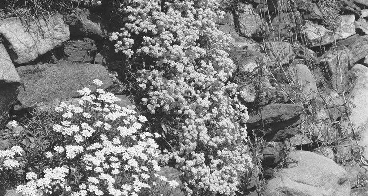 Jardins rochosos são opções de pouca manutenção para paisagismo em barrancos