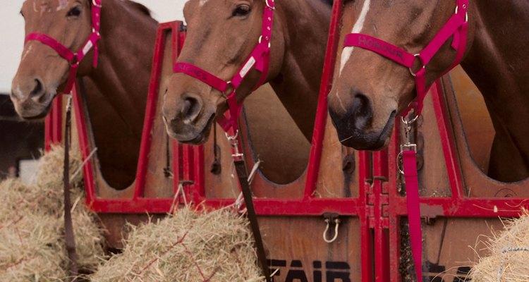 Los comederos de liberación lenta son buenos para tener caballos en espacios reducidos.