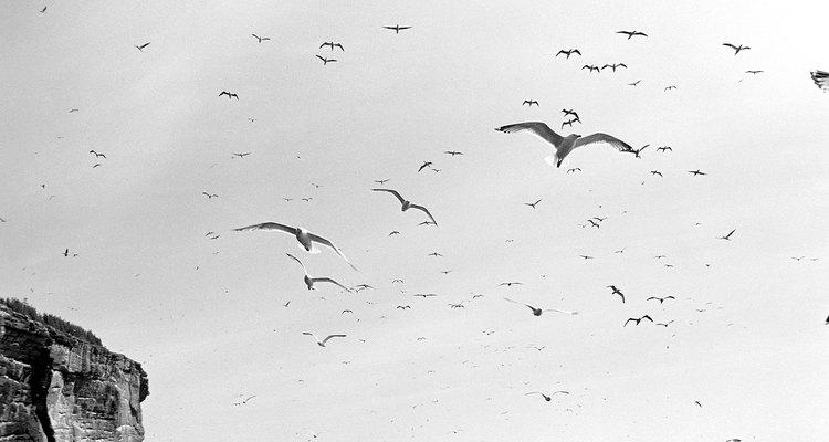 """Las aves migratorias pueden """"ver"""" el campo magnético de la Tierra."""