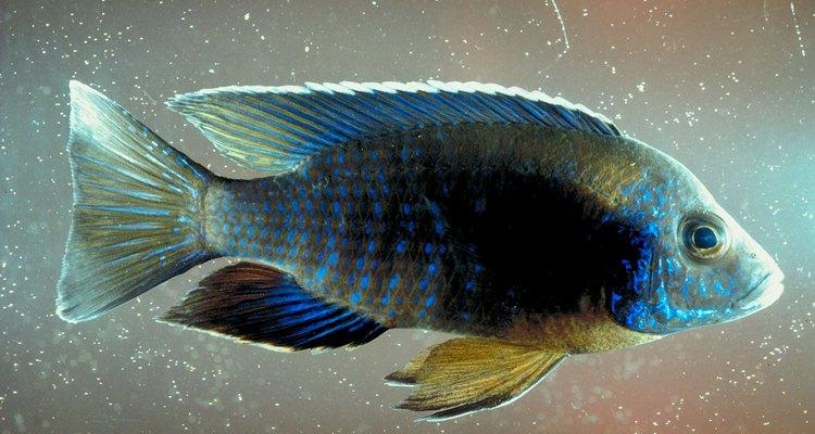 Better filtration means happier, healthier fish.
