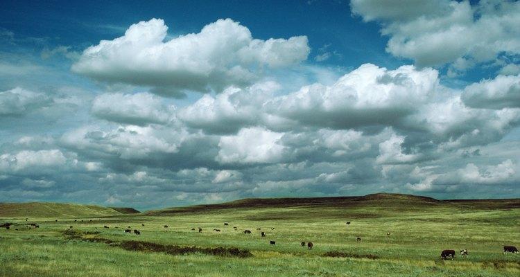 Fatores como a temperatura e a chuva ajudam a criar os campos