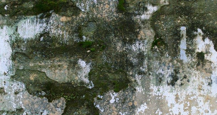 La mayoría de la coloración del moho es verde o negra.
