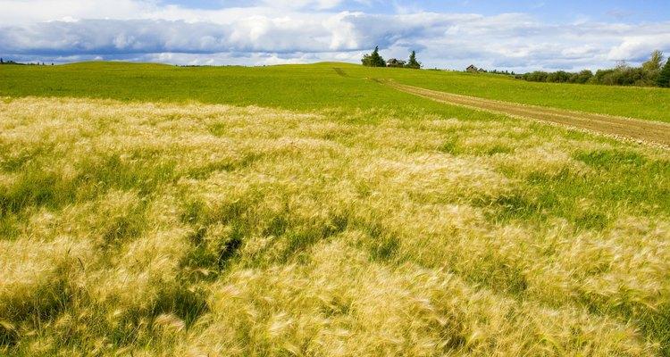 La tela de lino está hecha de la abundante y robusta planta de lino.