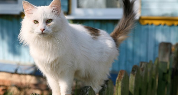 Cats can be a nuisance if they climb over your garden fence.