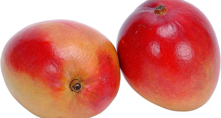 Mango trees are evergreen.