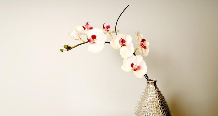 Las orquídeas Phalaenopsis están entre las de más fácil crecimiento.