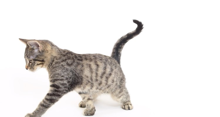 Os gatos são símbolos comuns nos mitos romanos, gregos e egípcios