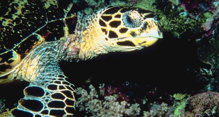 Limpe a água da sua tartaruga regularmente para manter o aquário livre de mosquitos