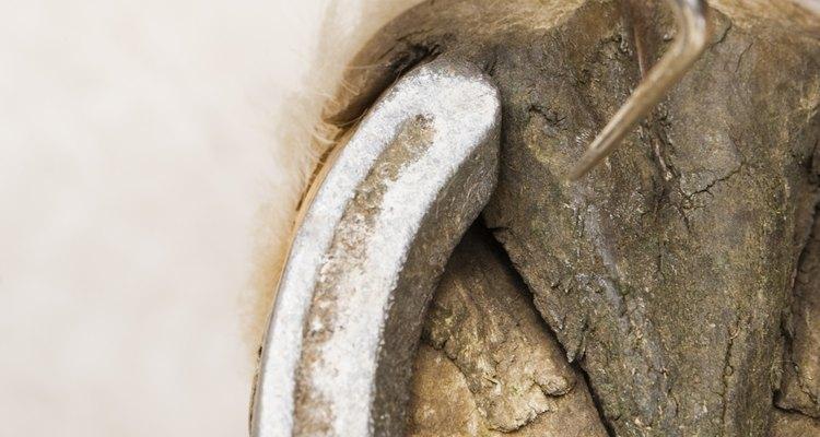 Limpar a sujeira da sola do pé do cavalo diariamente ajuda a curar os cascos macios