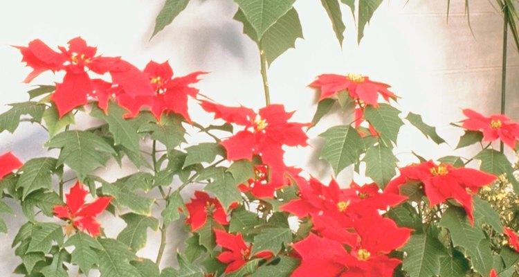 Las flores de los árboles suelen durar una estación del año.