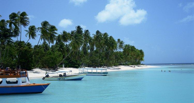 El pimiento es miembro de la familia de las solanáceas y es nativo de Trinidad.