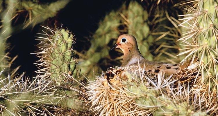 Tanto el macho como la hembra de las palomas participan en el cuidado de las crías.