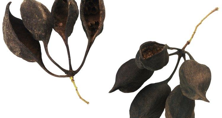 As plantas produzem suas sementes de várias maneiras diferentes
